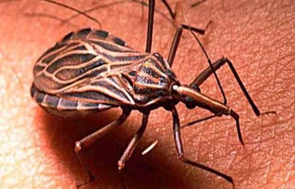 Transmisor Mal de Chagas